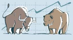 Illustration Bulle Bär